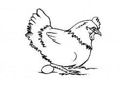 poule de basse cour