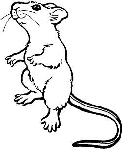 Anti comptine de la souris comptines comptines pour enfant - Dessin d un rat ...